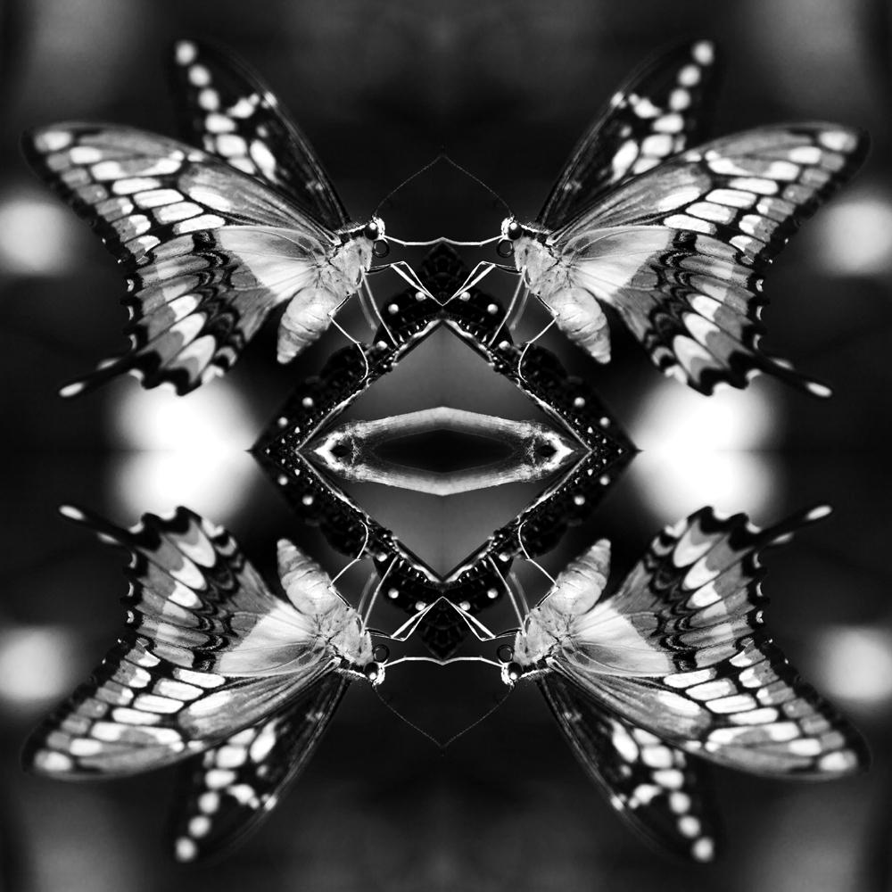 Papiliones-No-3-2015-Indira-Cesarine.jpg