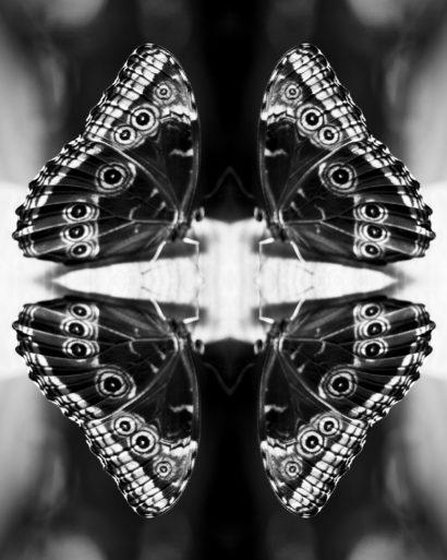 Papiliones-No-4-2015-Indira-Cesarine.jpg