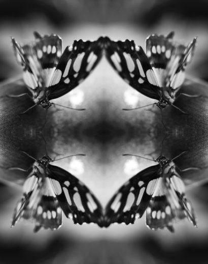 Papiliones-No-7-2016-Indira-Cesarine.jpg