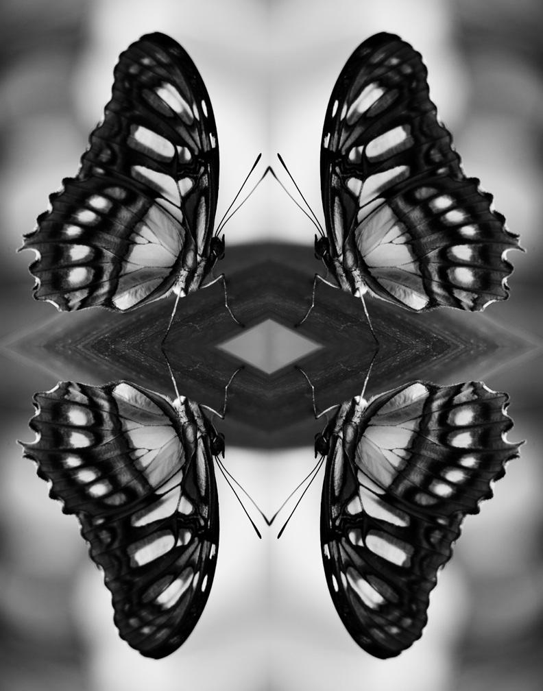 Papiliones-No-8-2016-Indira-Cesarine.jpg