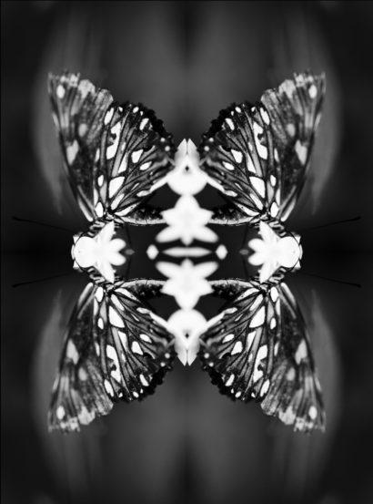 Papiliones-No-9-2016-Indira-Cesarine.jpg