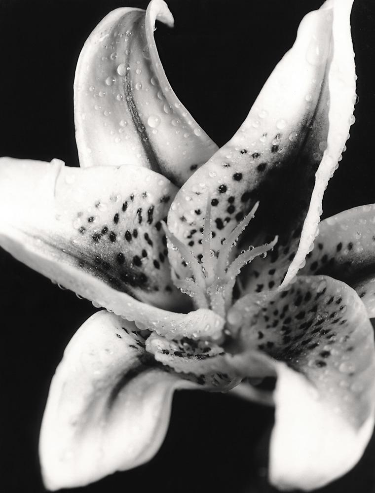 Indira-Cesarine-Flora-Series-1995-Silver-Gelatin-BW-Photography-Medium-format-Neg-Printed-on-Fiber-Paper-002.jpg