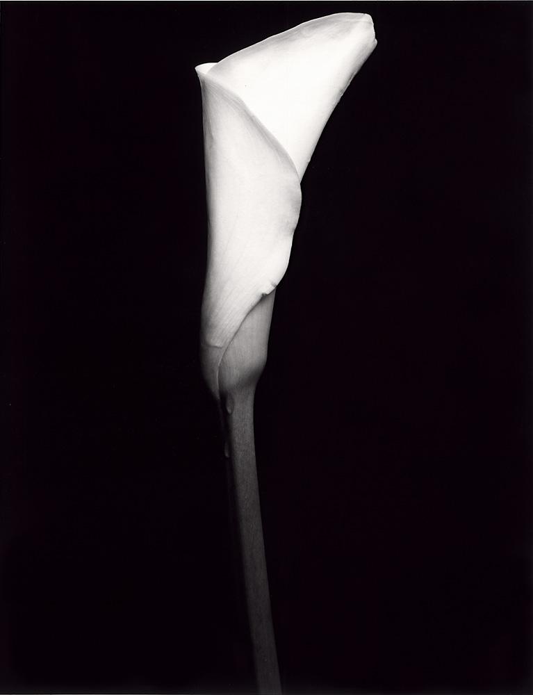 Indira-Cesarine-Flora-Series-1995-Silver-Gelatin-BW-Photography-Medium-format-Neg-Printed-on-Fiber-Paper-004.jpg