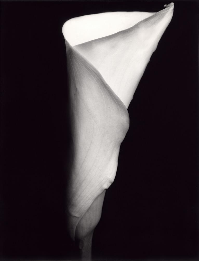 Indira-Cesarine-Flora-Series-1995-Silver-Gelatin-BW-Photography-Medium-format-Neg-Printed-on-Fiber-Paper-005.jpg