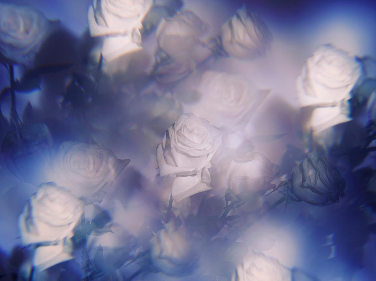 Indira-Cesarine-22The-Labyrinth-Les-Roses-Violettes22-1.jpg