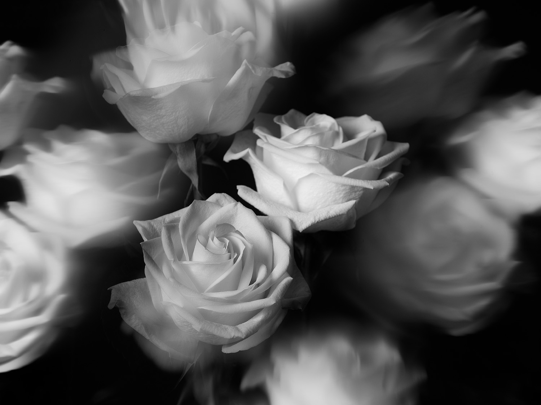 Indira-Cesarine-22The-Labyrinth-Rêver-de-Roses22-x.jpg