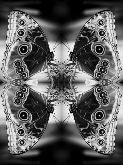 Papiliones-No-2.jpg
