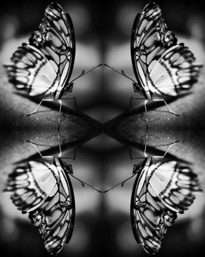 Papiliones-No-1-2015-Indira-Cesarine.jpg