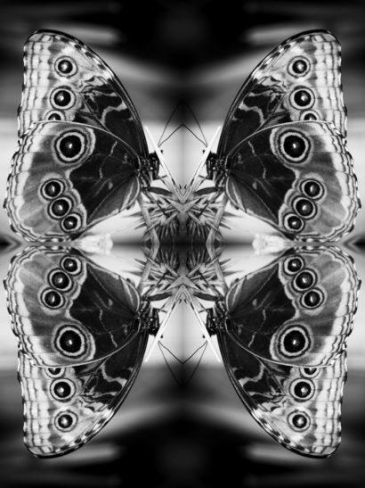 Papiliones-No-2-2015-Indira-Cesarine.jpg