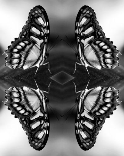 Papiliones-No-5-2016-Indira-Cesarine.jpg