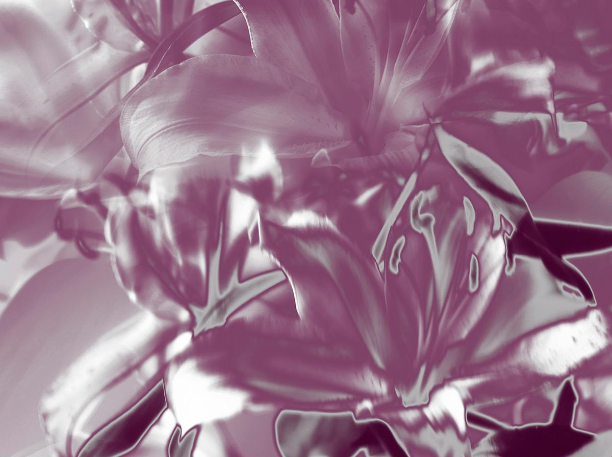 Indira-Cesarine-22The-Labyrinth-Pink-Silver-Lillies22..jpg