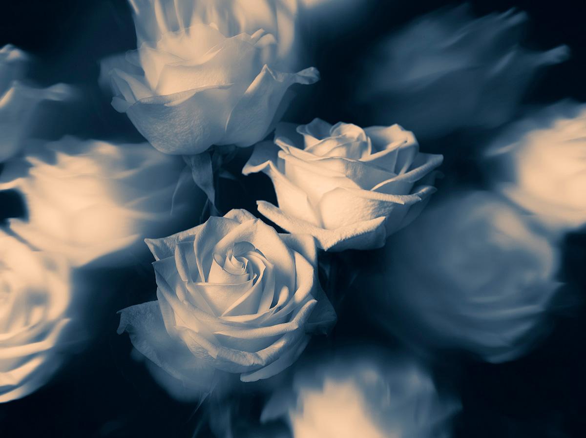 Indira-Cesarine-22The-Labyrinth-Rêver-de-Roses-Bleues22.jpg