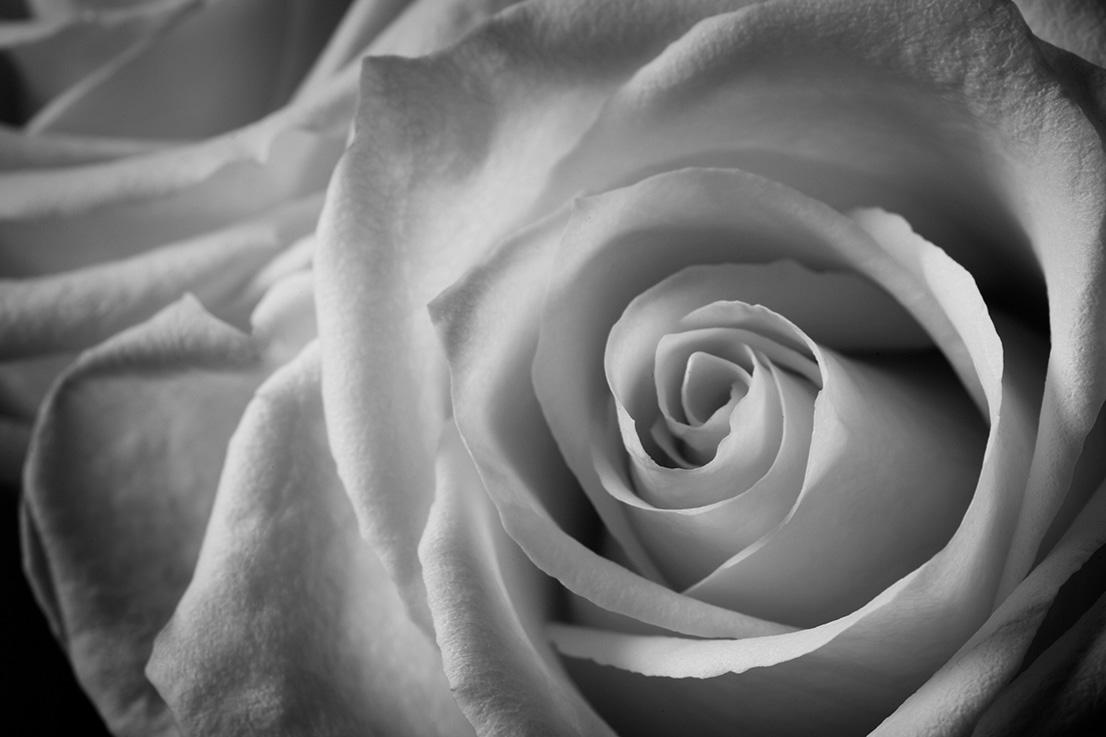 Indira-Cesarine-22The-Labyrinth-Rose-Blanche-No.-122.jpg