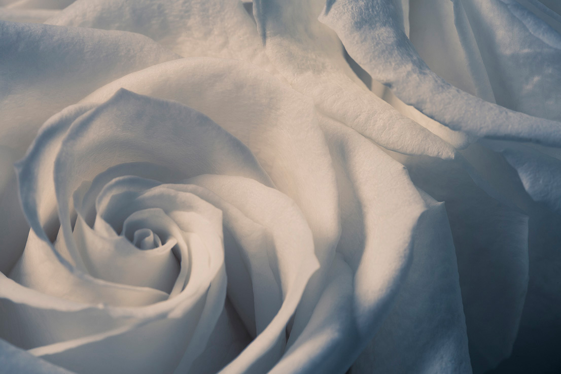 Indira-Cesarine-22The-Labyrinth-Rose-Blanche-No.-222.jpg