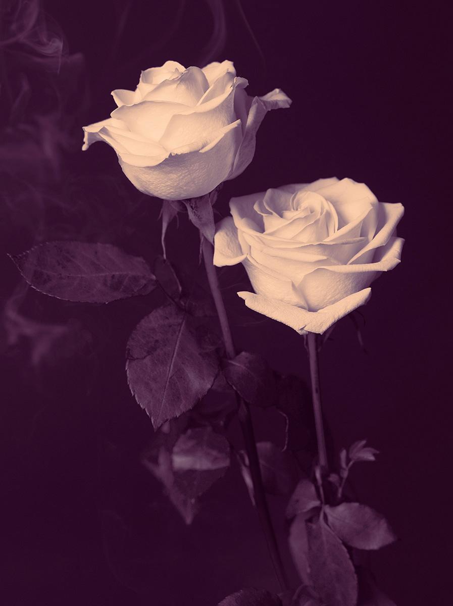 Indira-Cesarine-22The-Labyrinth-Smoking-Magenta-Roses22.jpg
